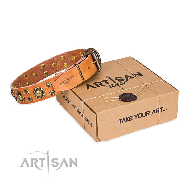 Daily leather dog collar with refined adornments