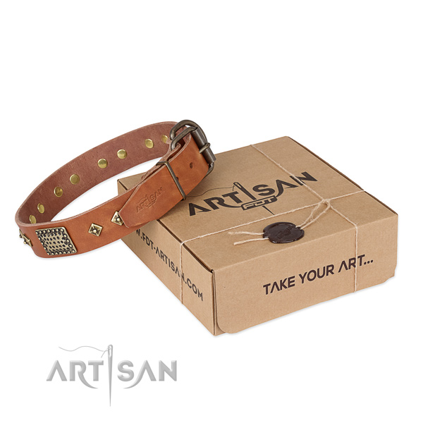 Designer leather dog collar for walking