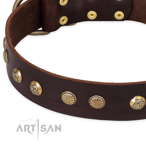 Quick to fasten leather dog collar with extra sturdy durable fittings