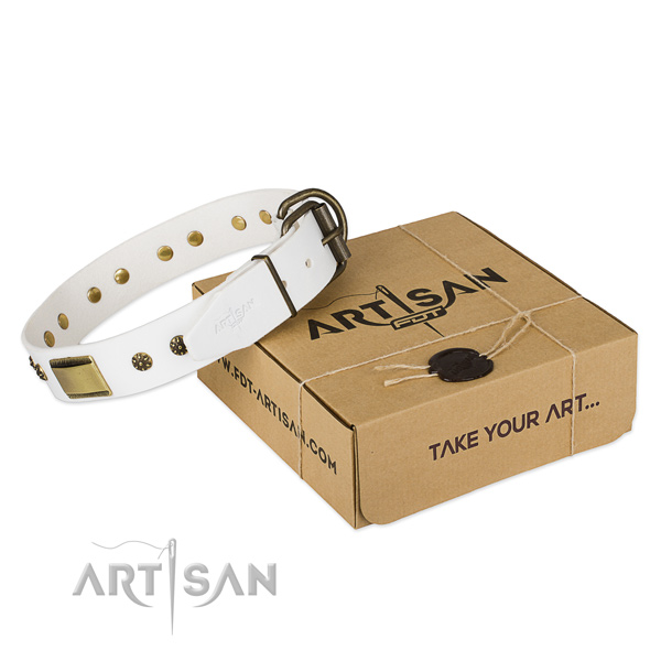 Finest quality leather dog collar for walking