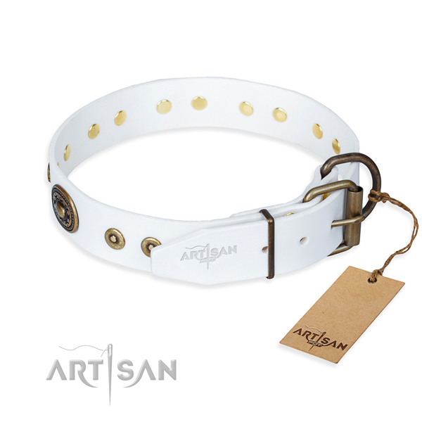 Daily leather collar for your stunning dog