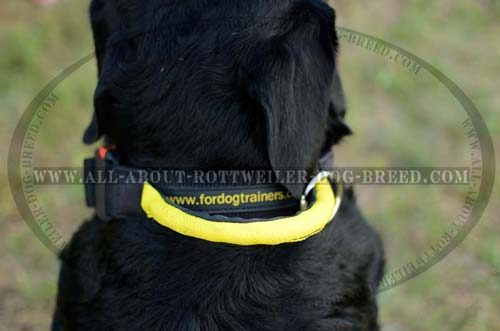 Easy Grab Round Handle on Effective Training Nylon Dog Collar