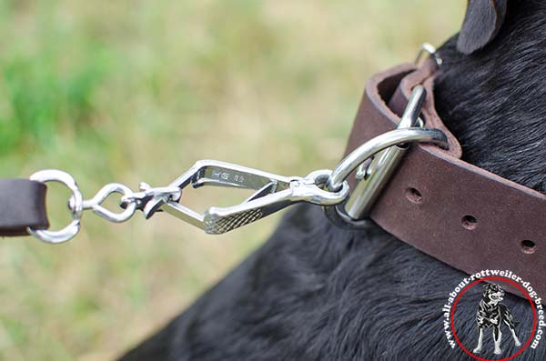 Leather Rottweiler collar with nickel plated fittings - close-up