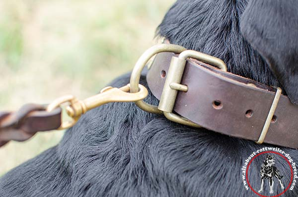 Leather Rottweiler collar with durable hardware