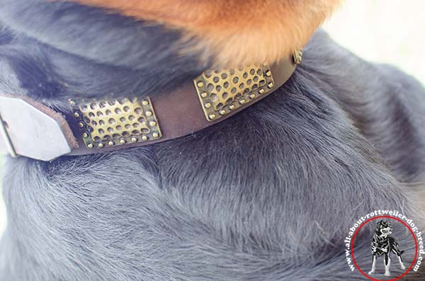 Leather Rottweiler collar with embossed old-looking plates