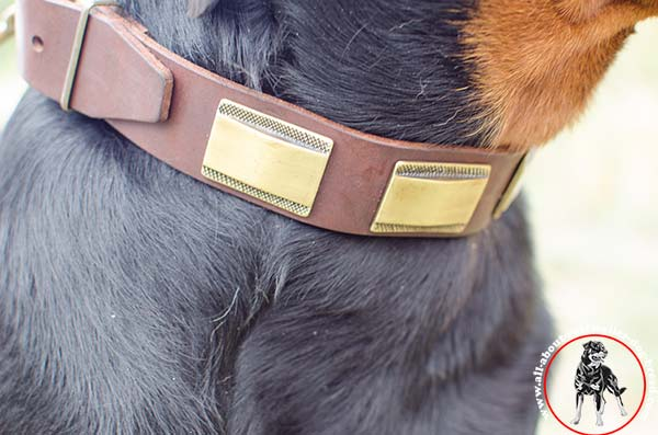Leather Rottweiler collar with brass plated embellishment -close look