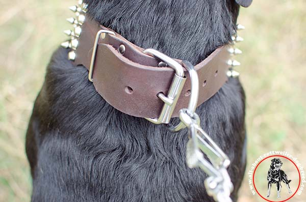 Lasting leather Rottweiler collar with nickel plated fittings
