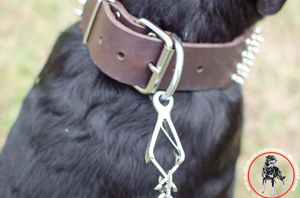 Leather Rottweiler collar with rust-proof fittings