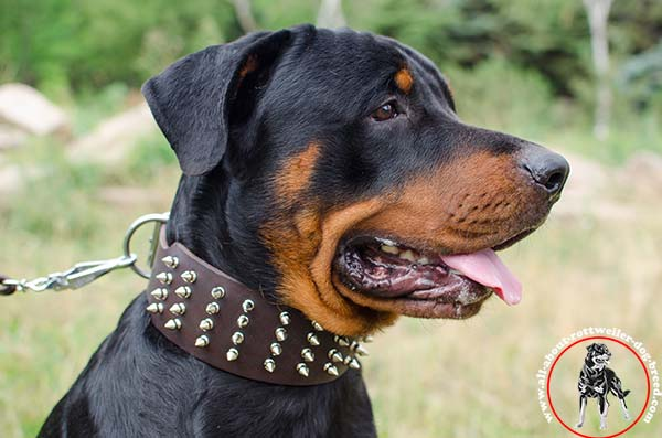 A-grade leather Rottweiler collar