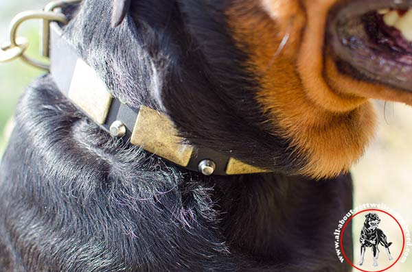 Stylish leather Rottweiler collar with rust-proof plates and pyramids