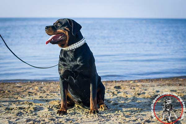 Strong and reliable leather canine collar for Rottweiler