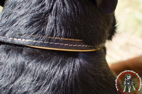 Leather canine collar for Rottweiler with white stitching