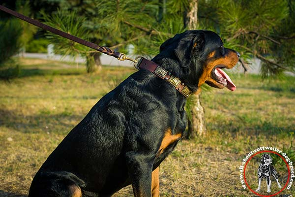 Walking leather canine collar for Rottweiler