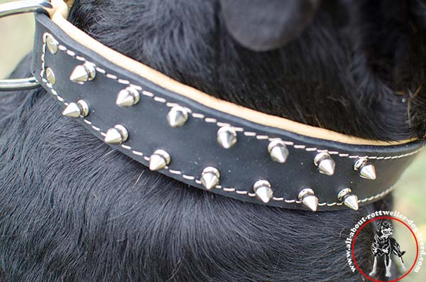 Astonishing leather canine collar for Rottweiler with 2 rows of spikes