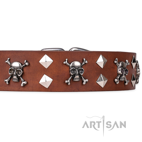 Day-to-day leather dog collar with remarkable decorations