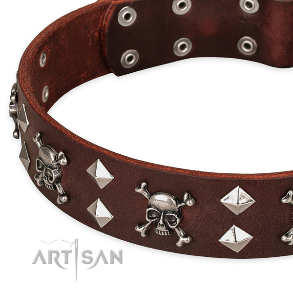 Fancy leather dog collar for stylish walking