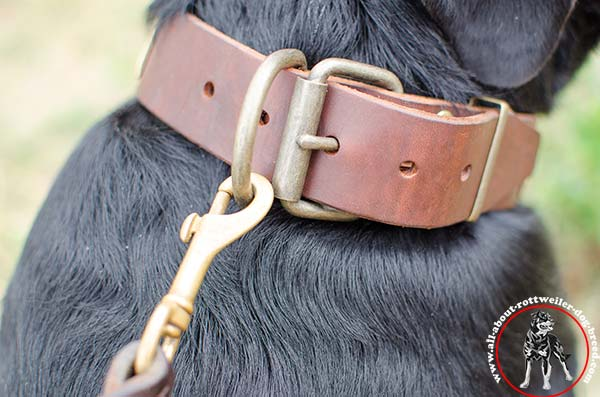 Leather dog collar for Rottweiler with brass plated hardware - close look