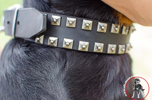 Wear-proof leather dog collar for Rottweiler