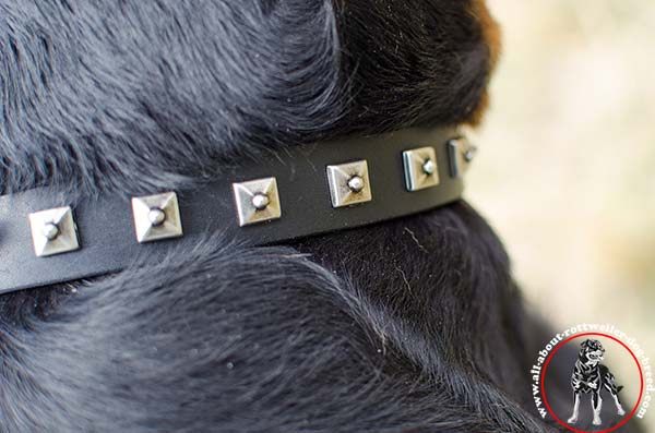 Leather dog collar for Rottweiler with nickel plated studs