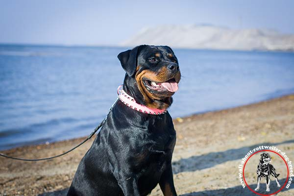 Designer leather dog collar for Rottweiler