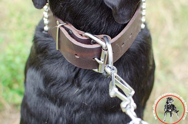 Strong leather dog collar for Rottweiler with nickel plated fittings