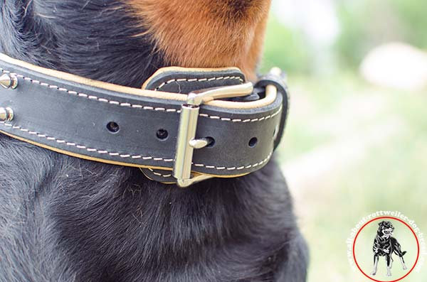 Leather dog collar for Rottweiler with reliable buckle