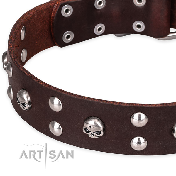Day-to-day leather dog collar with fancy embellishments