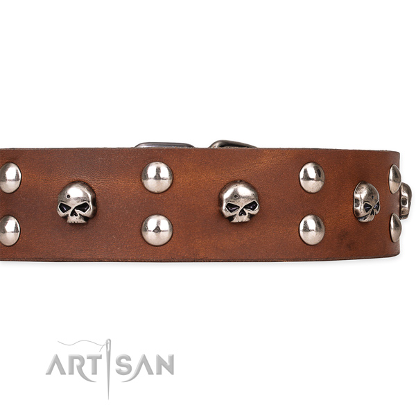 Natural leather dog collar with thoroughly polished surface