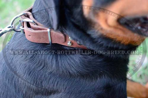 Nickel Plated Hardware of Designer Leather Dog Collar
