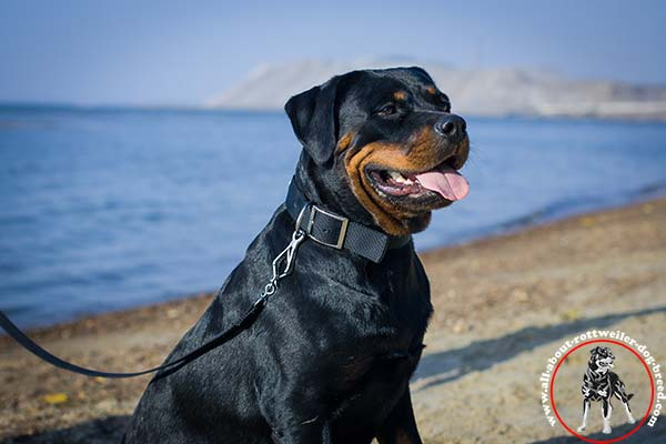 Classical nylon Rottweiler collar