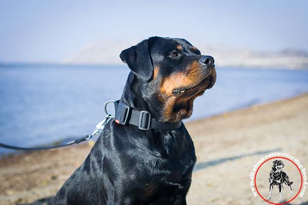 Adjustable nylon dog collar for Rottweiler