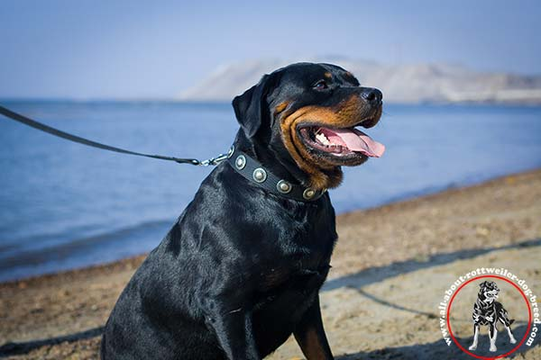 Nylon dog collar for Rottweiler with silver-like conchos