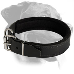 Rottweiler Dog Adjustible Training Padded Leather  Collar