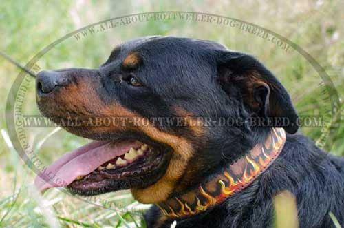 Rottweiler Exclusive Design Leather Collar with Flames