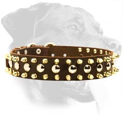 Perfect Rottweiler Leather Dog Collar