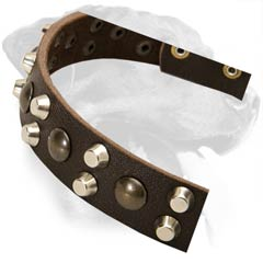 Decorated Rottweiler Leather Dog Collar