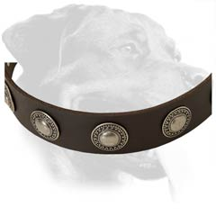 Reliable Rottweiler Leather Dog Collar
