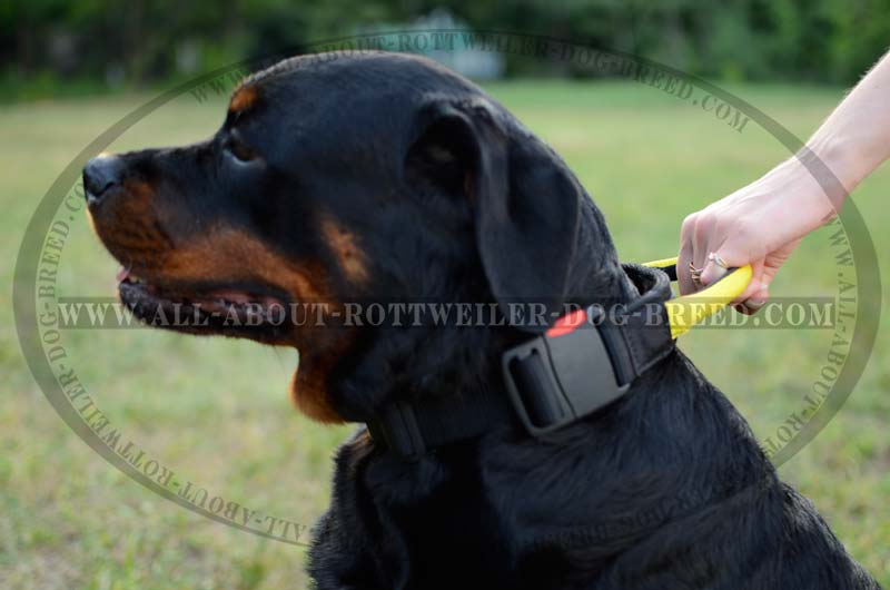 Two Handle Dog Lead