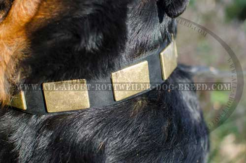 Marvelous Rottweiler Leather Collar with Brass Plates