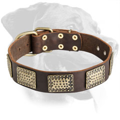 Rottweiler Dog Gorgeous Leather Collar with plates