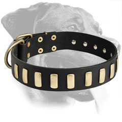 Rottweiler Breed Stylish Leather Collar with Plates