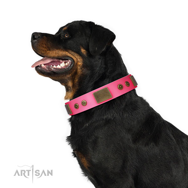 Stunning natural genuine leather collar for your stylish four-legged friend