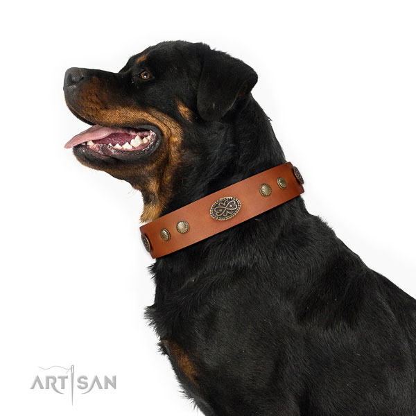 Corrosion resistant traditional buckle on full grain genuine leather dog collar for daily walking