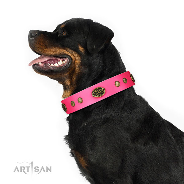 Durable fittings on full grain genuine leather dog collar for stylish walking