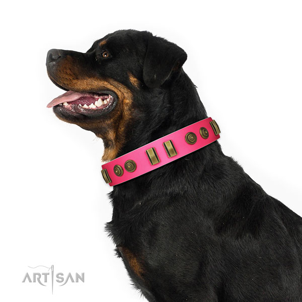 Walking dog collar of leather with fashionable embellishments