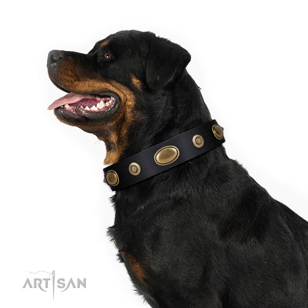 Comfy wearing dog collar of natural leather with extraordinary adornments