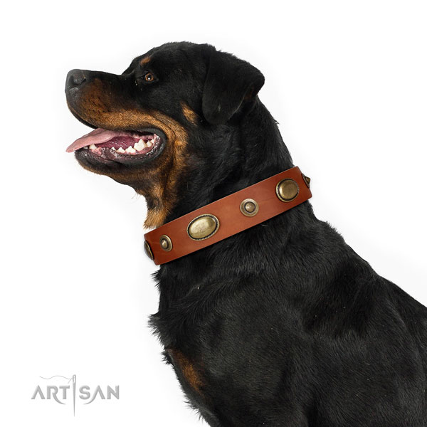 Everyday walking dog collar of natural leather with fashionable studs