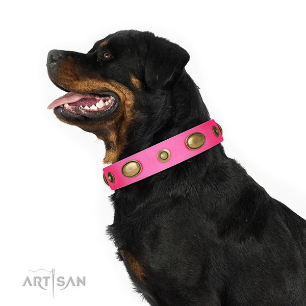 Daily walking dog collar of leather with top notch studs
