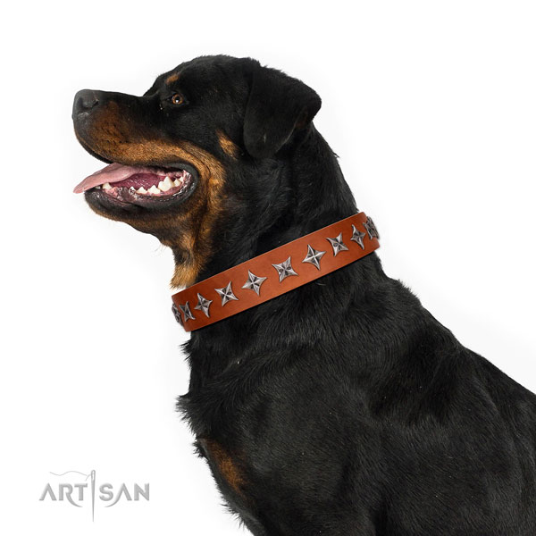 Everyday walking adorned dog collar of best quality natural leather