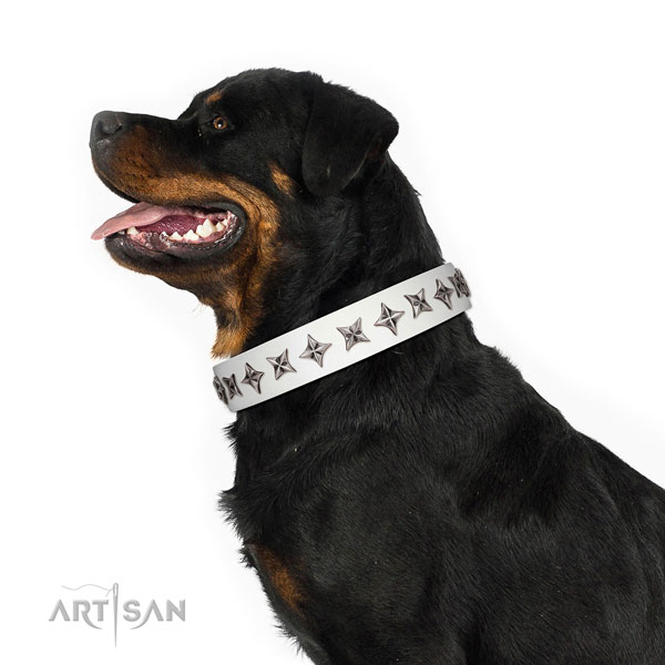 Strong full grain genuine leather dog collar with impressive studs